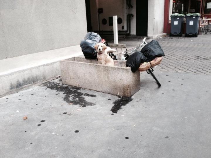 http://www.demitourdefrance.fr/files/gimgs/th-20_chien_vasque.jpg